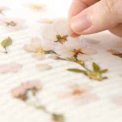 Appree Pressed Flower Stickers - Cherry Blossoms