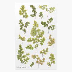Appree Pressed Flower Stickers - Adiantum
