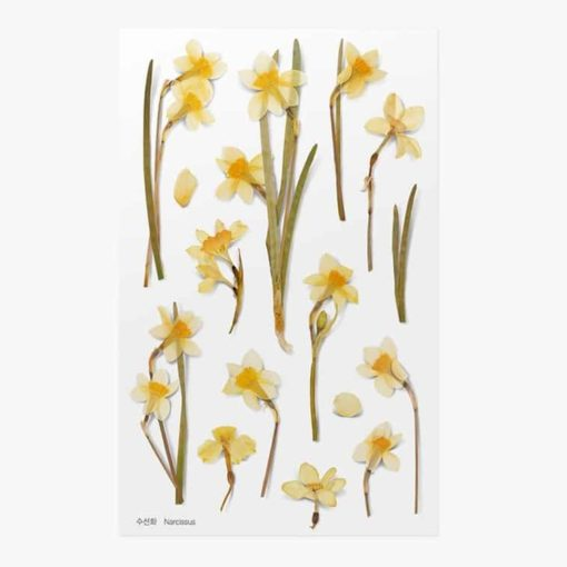 Appree Pressed Flower Stickers - Narcissus