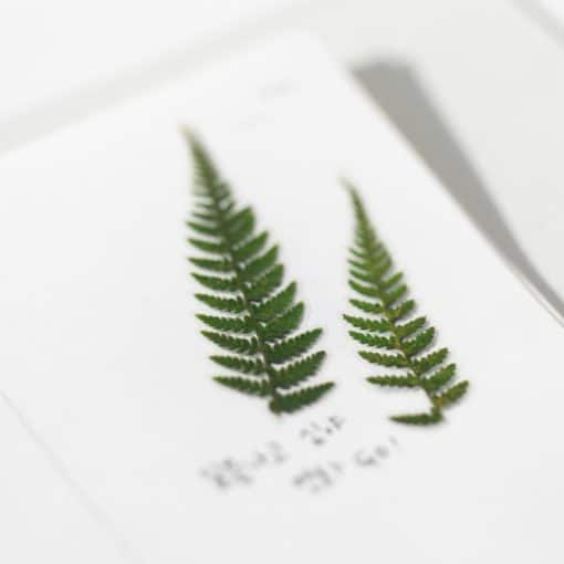 Appree Pressed Flower Stickers - Fern