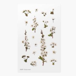 Appree Pressed Flower Stickers - Bridal Wreath