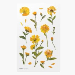 Appree Pressed Flower Stickers - Calendula