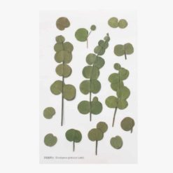 Appree Pressed Flower Stickers - Eucalyptus